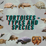 Tortoise Species and Types + Fun Facts