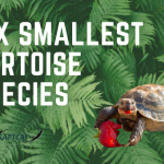 Six smallest tortoise species - A detailed Discussion