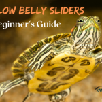 Everything You Need About Yellow Belly Sliders - A Beginner's Guide