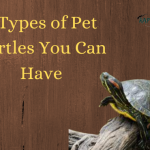 5 Types of Pet Turtles You Can Have - Detailed Information