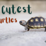 6 Cutest Turtles Species You Should know About + Fun Facts