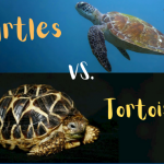 Turtles vs. Tortoises - A Detailed Differentiation + Pictures