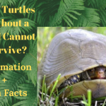 Why Turtles Without a Shell Cannot Survive? Information + Fun Facts